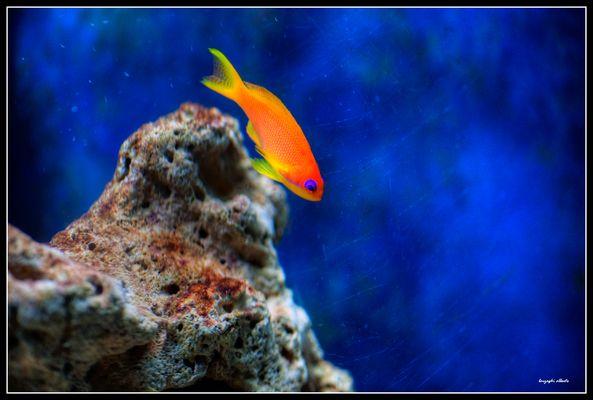 pesciolino tropicale