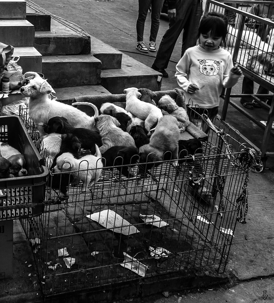 pet-market