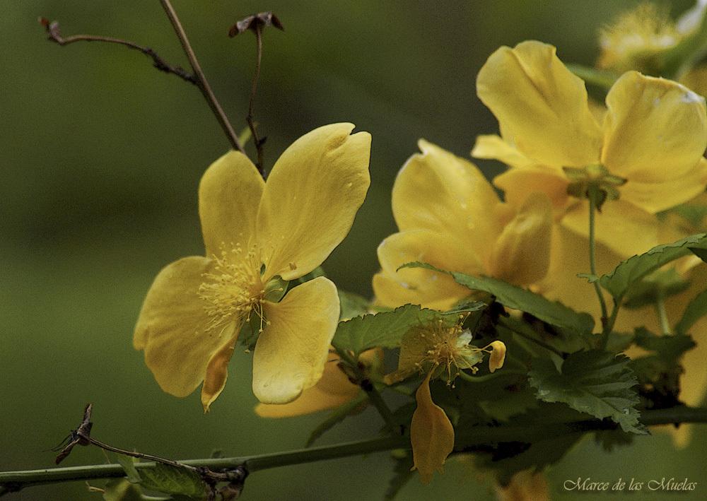 ...petalos amarillos...