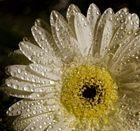 petals & drops
