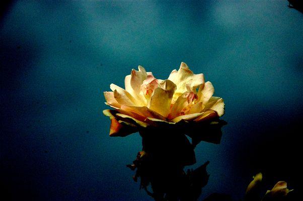 petals on the stem.