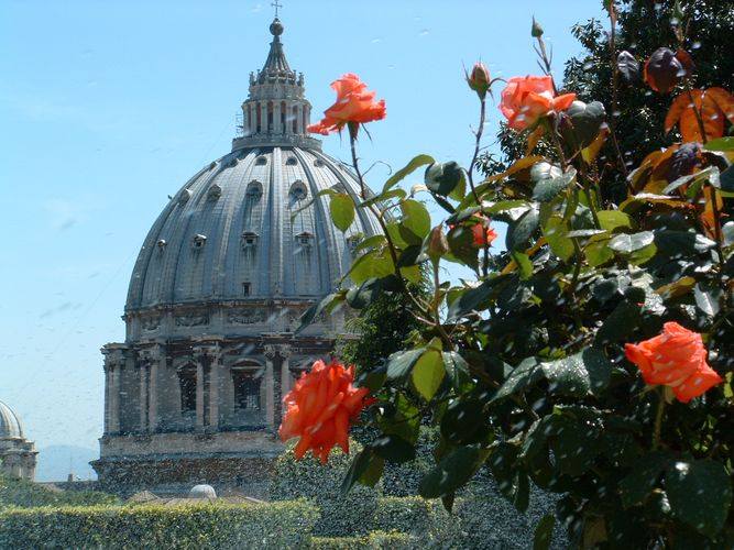 Petersdom mit Rosen