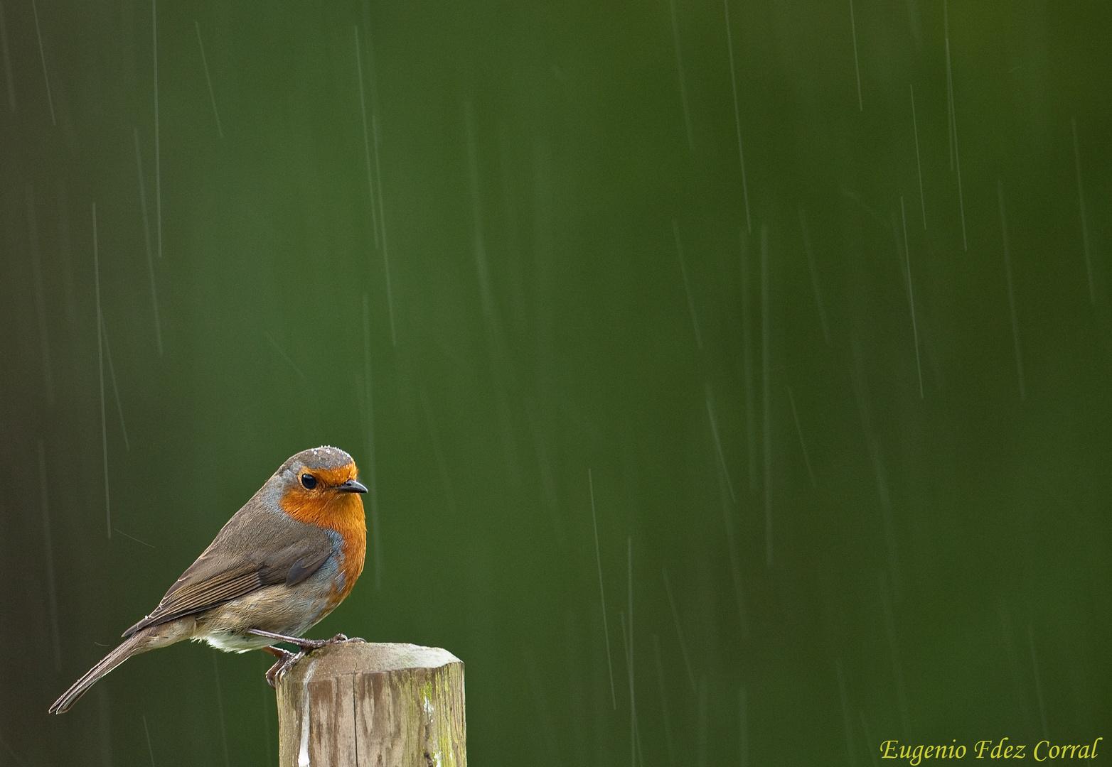 Peti bajo la lluvia 2