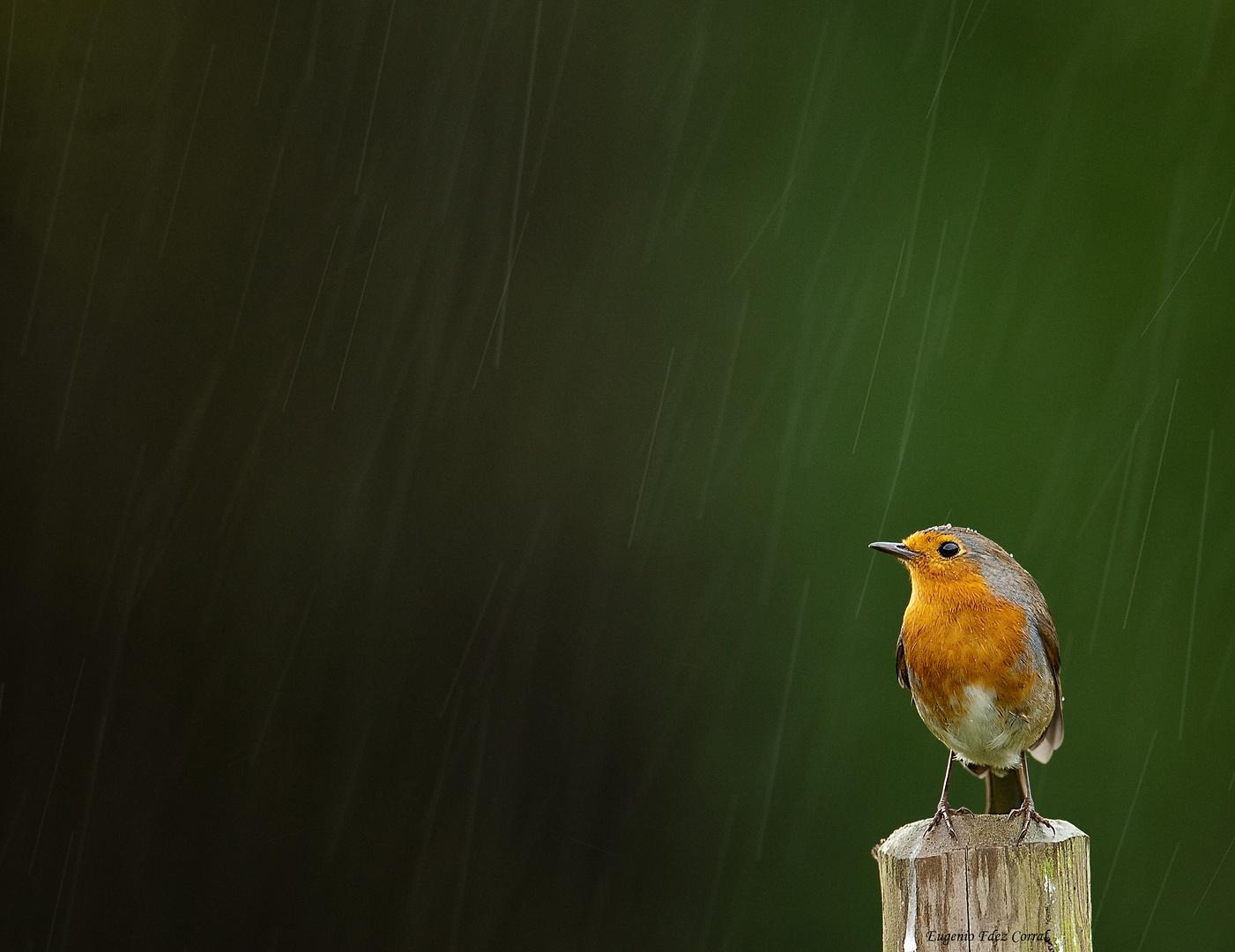 Peti bajo la lluvia 3