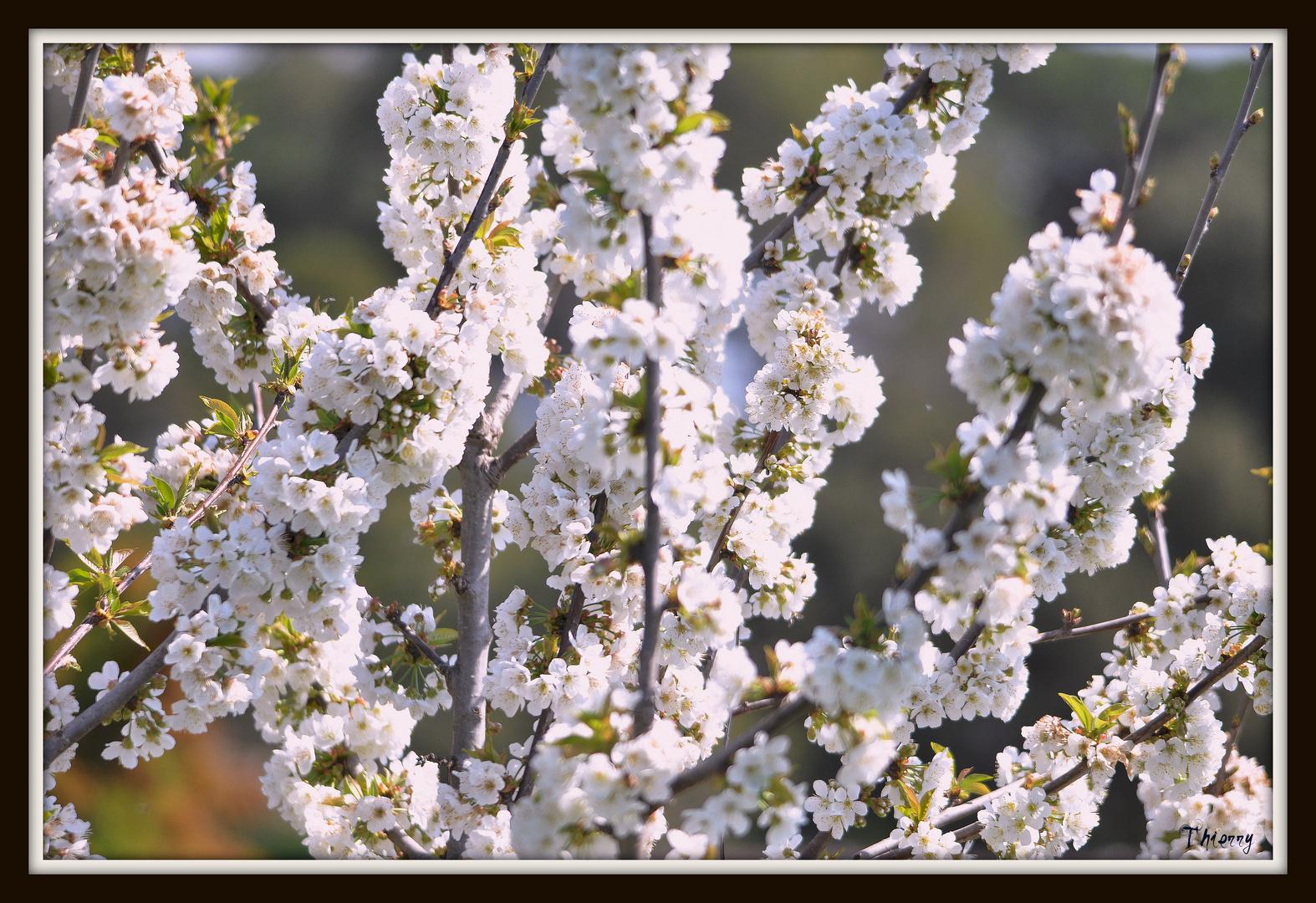 Peties fleurs