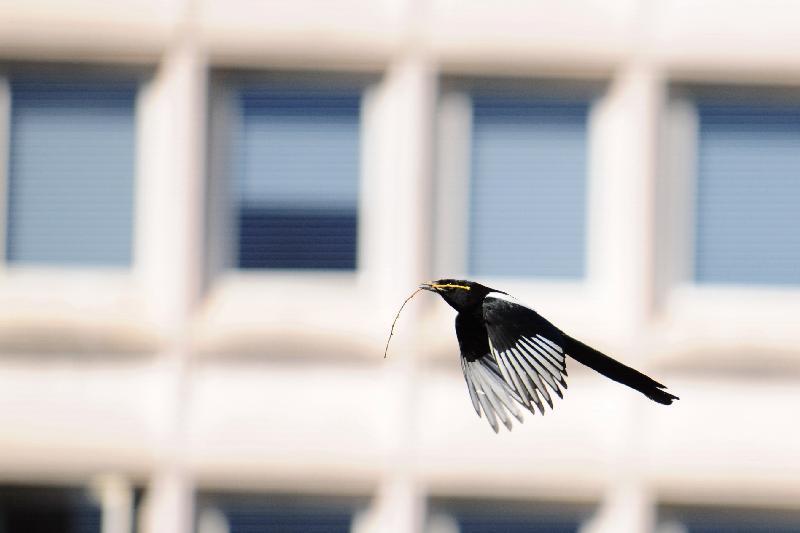 Petit à petit l'oiseau fait son nid