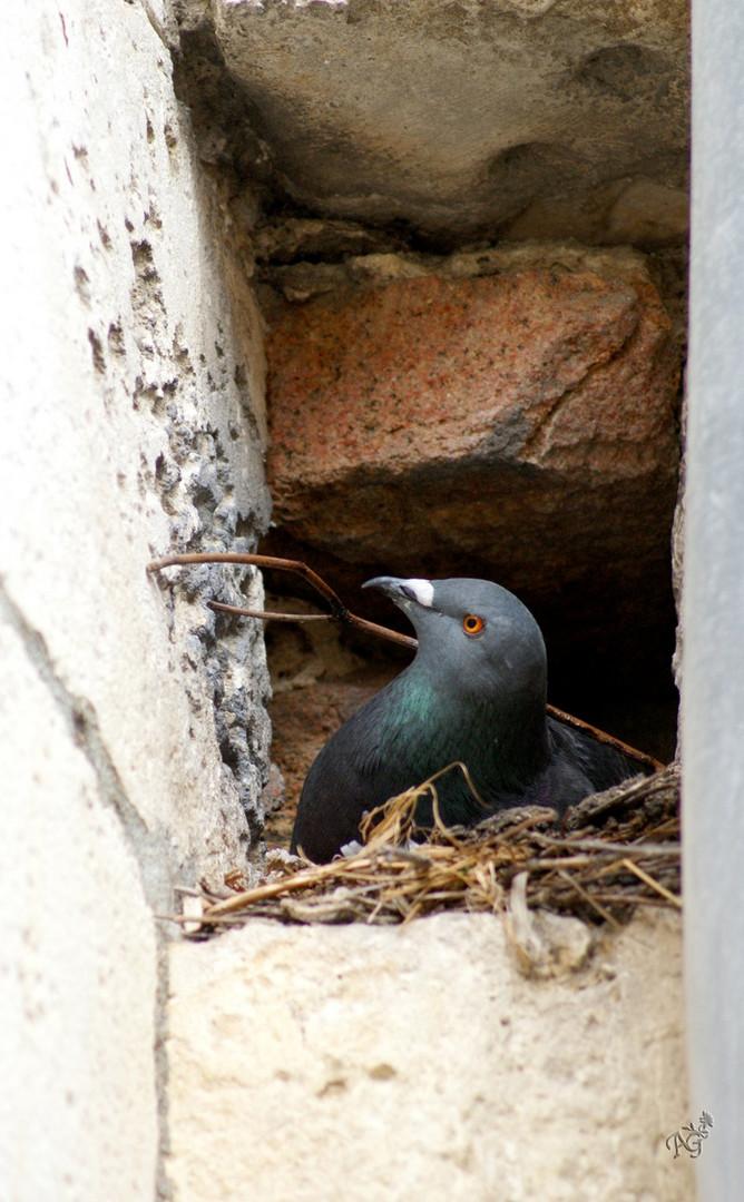 Petit à petit l'oiseau fait son nid ......