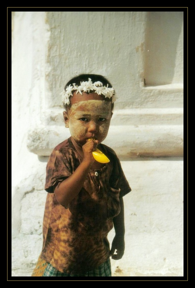 petit ange birman