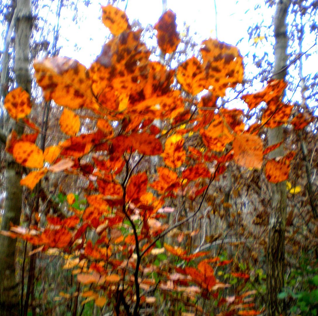 petit arbre en automne