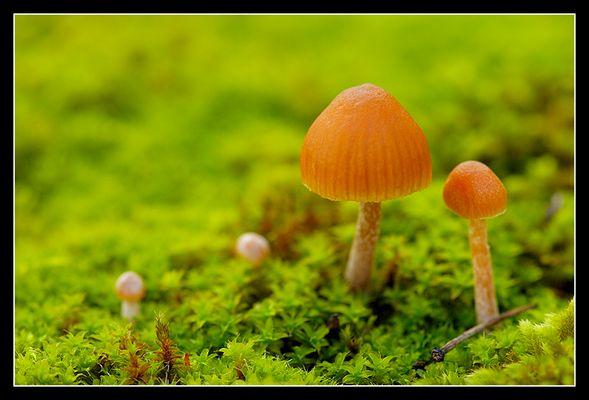 Petit champignon 1