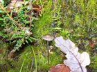 petit champignon qui cherche la lumière