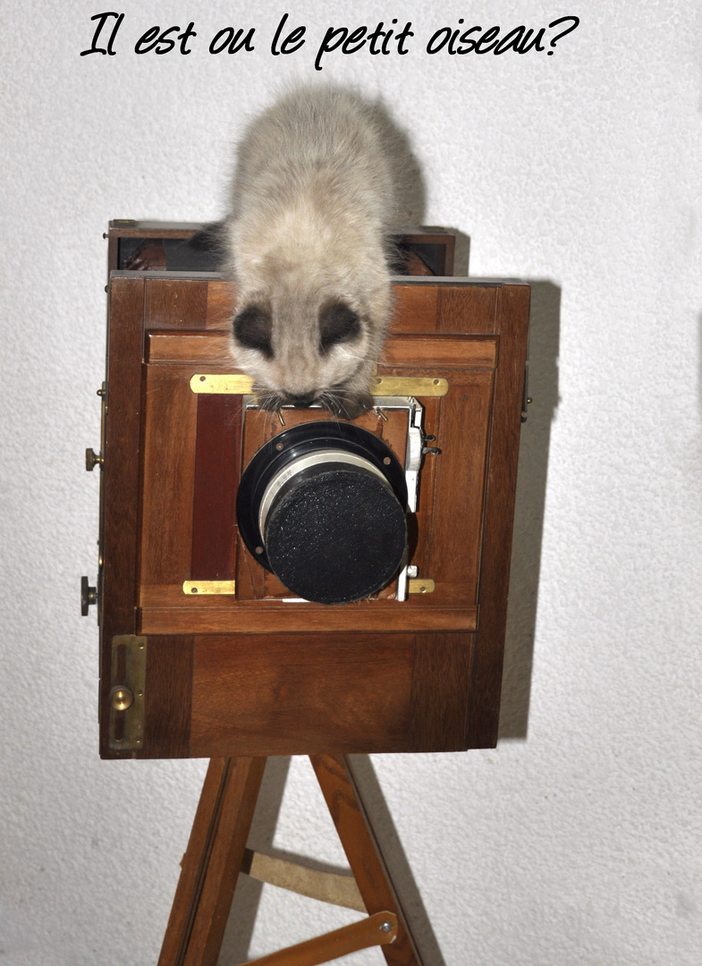 petit chat 018_copy