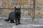 Petit chat en balade!!!