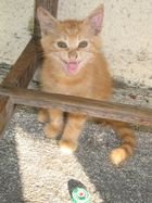 petit chat sauvage