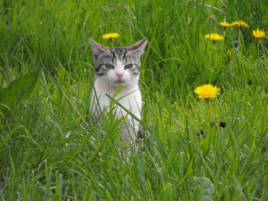 Petit chaton dans la prairie