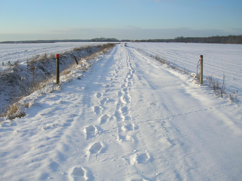 petit chemin sous la neige