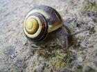 petit escargot deviendra grand