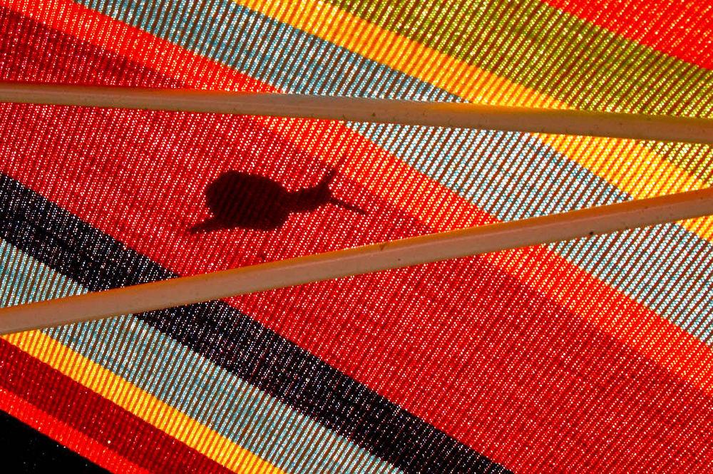 petit escargot sur parasol
