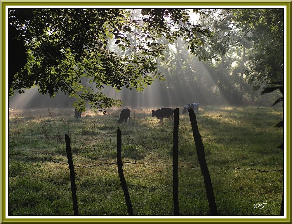 petit matin dans le marais poitevin