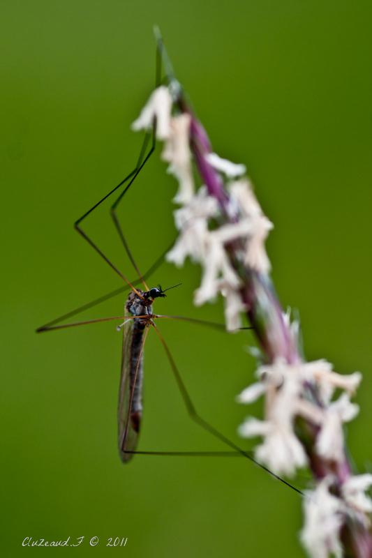 Petit moustique!