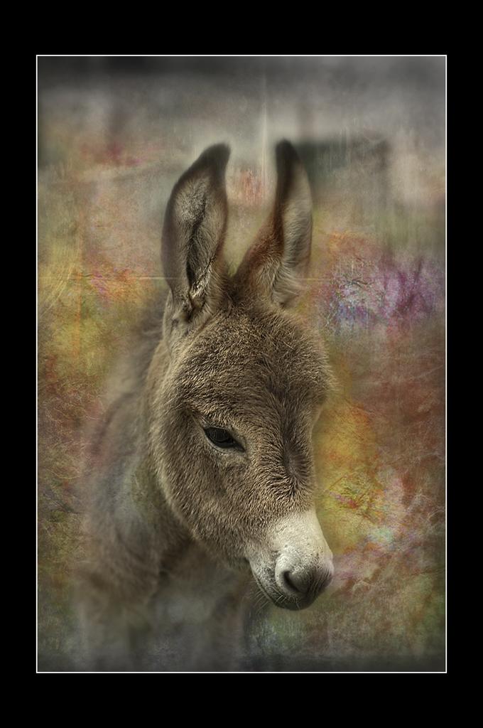 Petit âne...