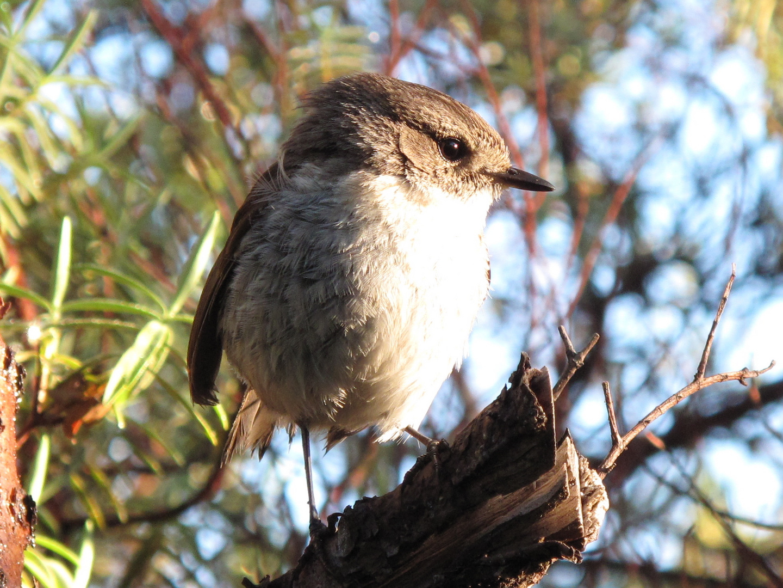 petit oiseau de bon matin