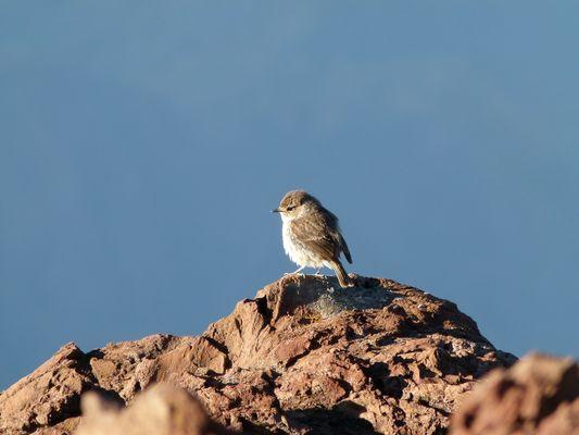 petit oiseau en haut du sommet