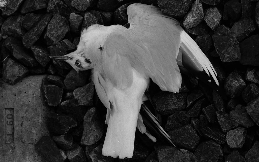 petit oiseau tombé de l'appareil