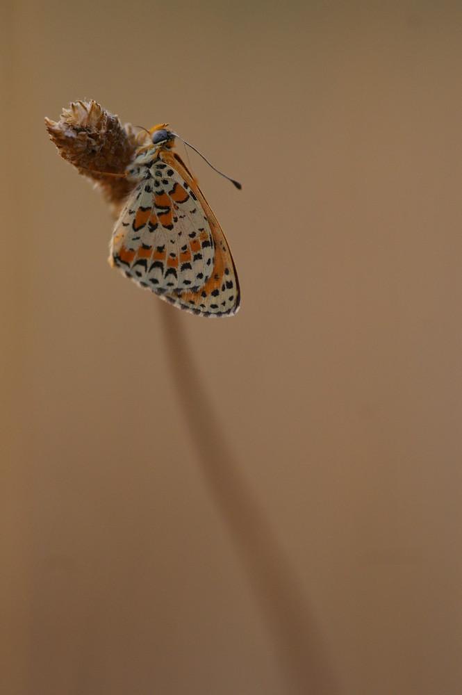 Petit papillon du matin