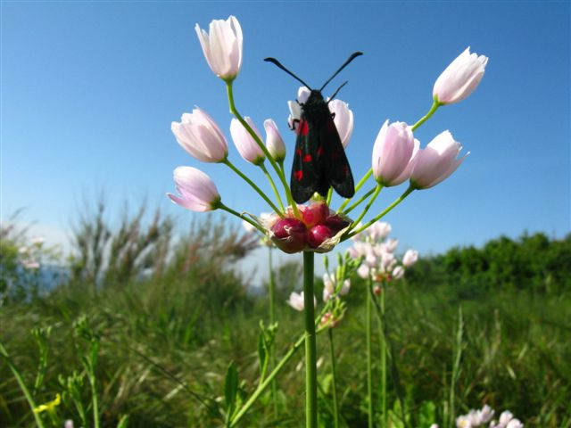 Petit papillon gourmand
