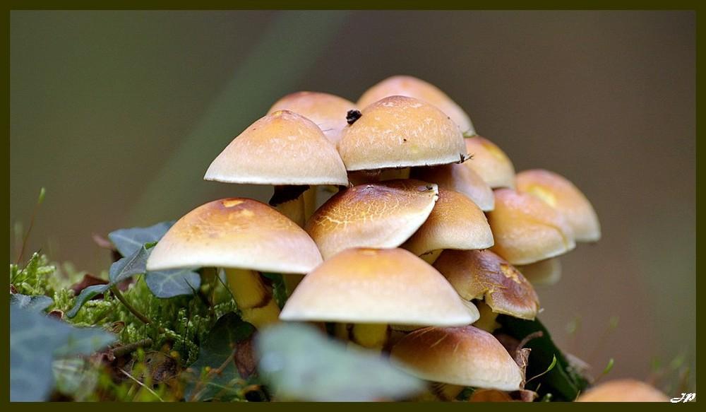 Petit plan de champignons..