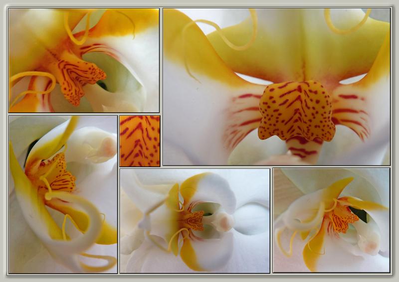 petit pêle-mêle de détails d'orchidée.