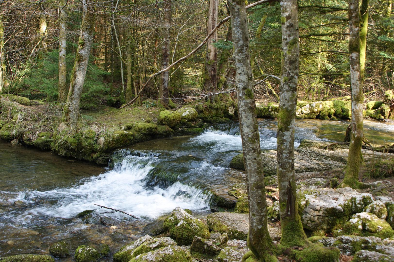 petit riviere tranquille