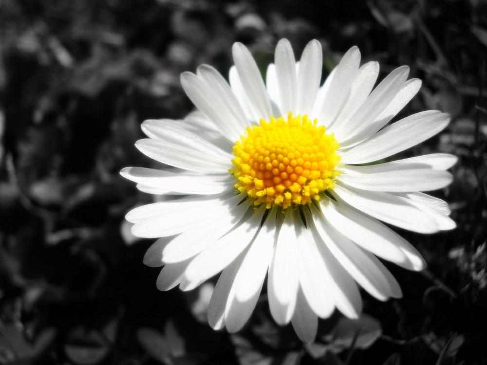 {Petit soleil, coeur en or, blanc de la pureté.}