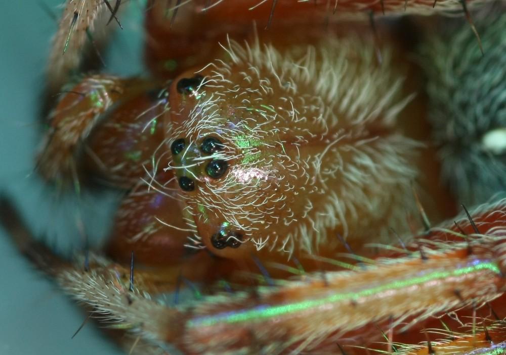 Petite araignée.