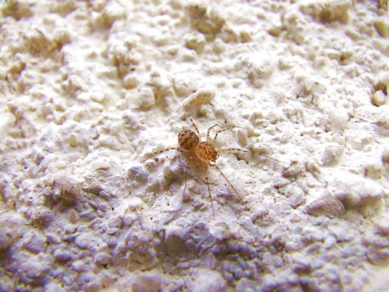 petite araignée.....