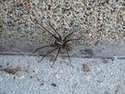 petite araignée sur ma terrasse