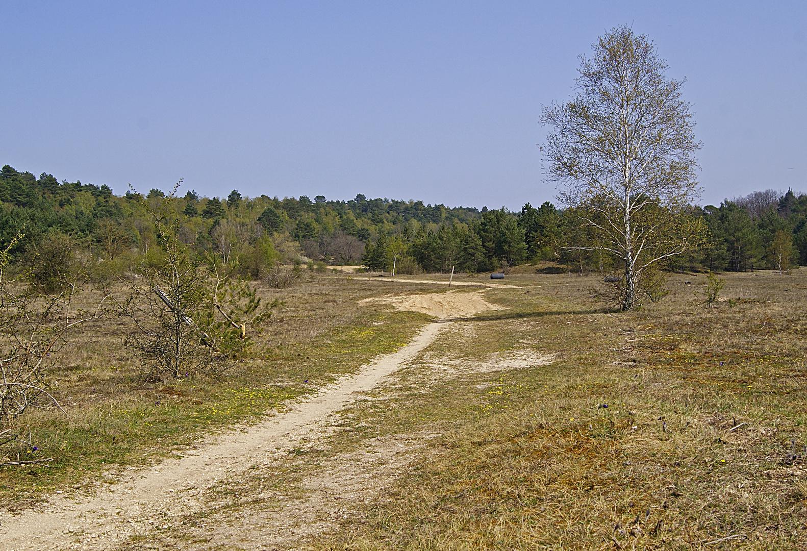 petite balade à la Plaine de Chanfroy, forêt de Fontainebleau
