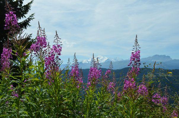 petite carte postale mont caly dans les alpes