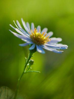 Petite fleur abandonnée
