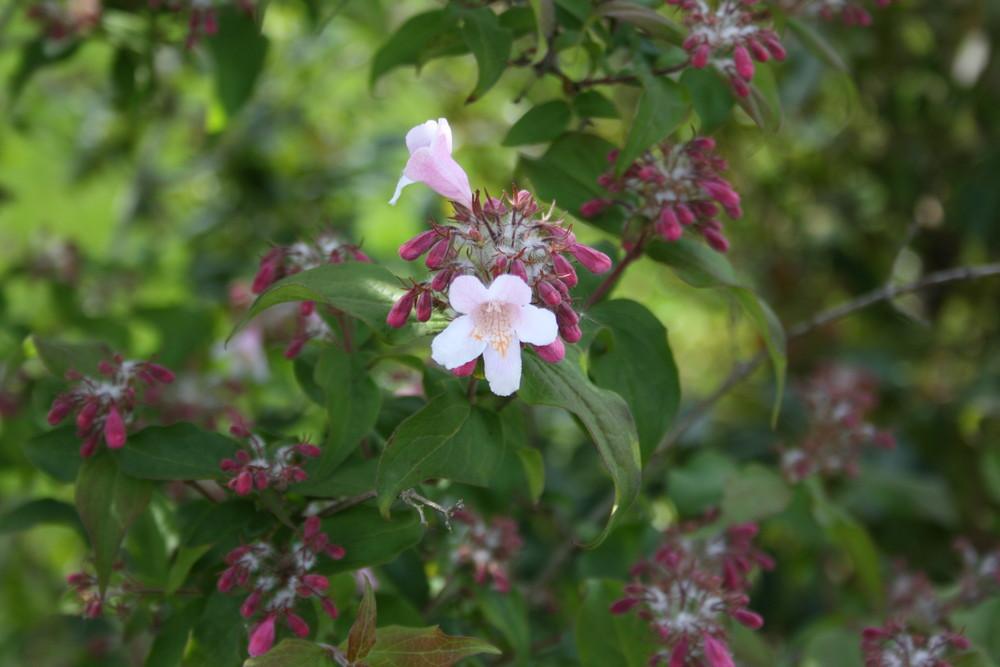 Petite fleur de Bretagne