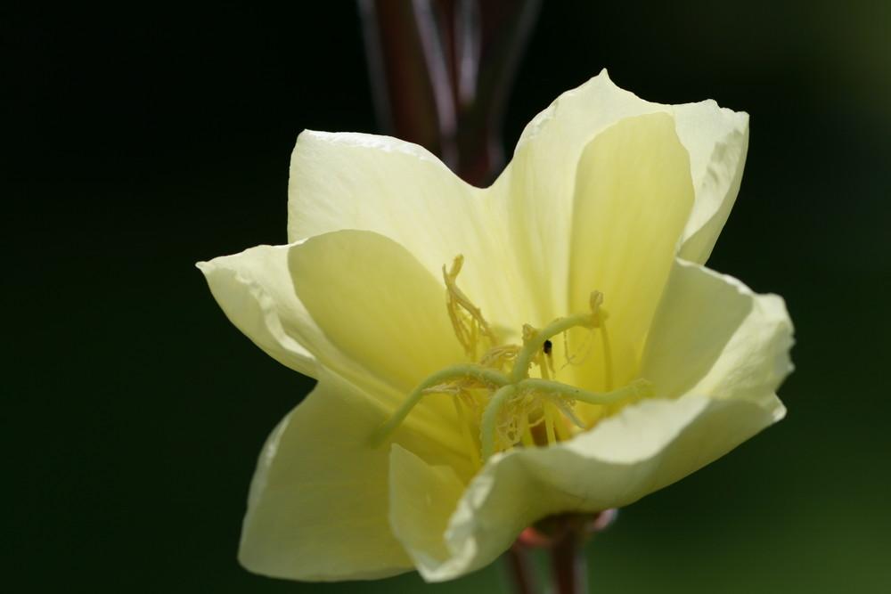 petite fleur de jardin