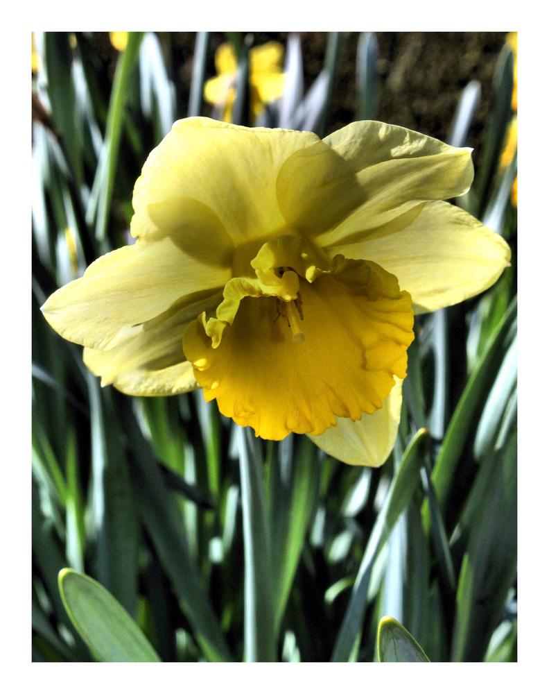 petite fleur de printemps