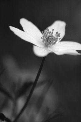 petite fleur des champs...