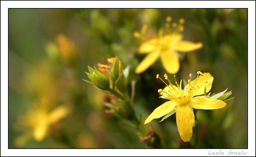 petite fleur d'été...