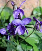 Petite fleur du jardin