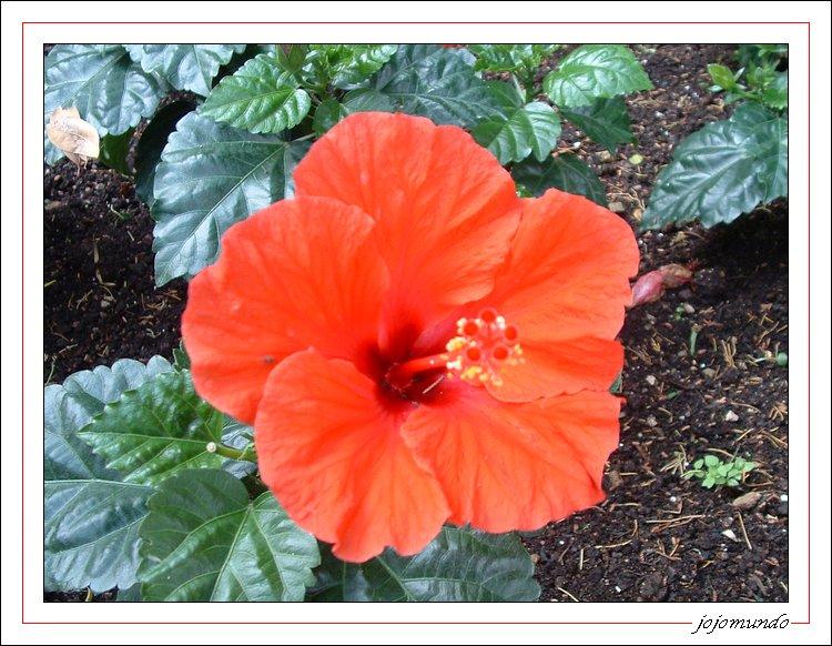 petite fleur du lac de garde