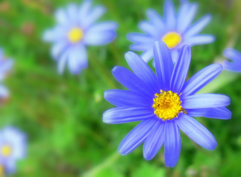 petite fleur..