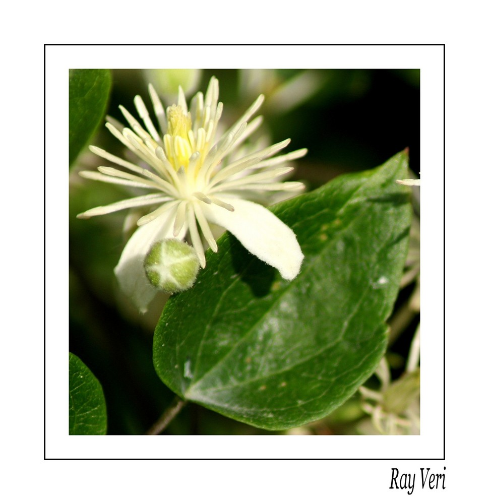 petite fleur jolie jolie