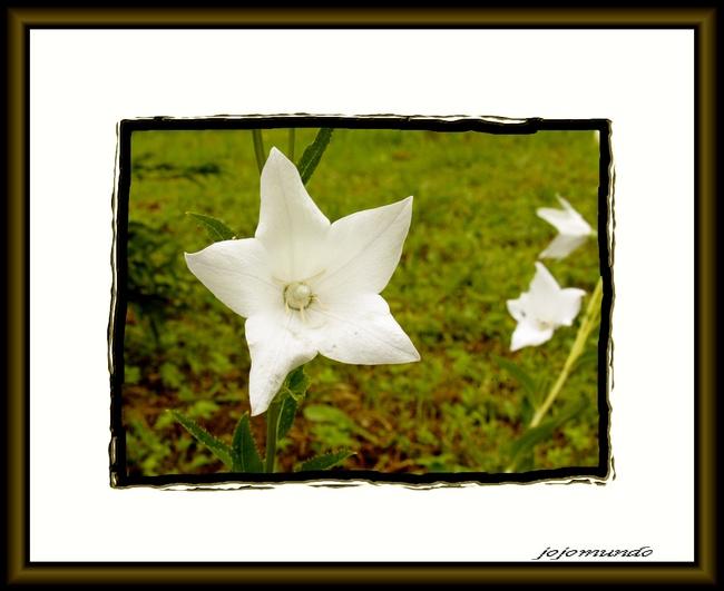 petite fleur pour dimanche